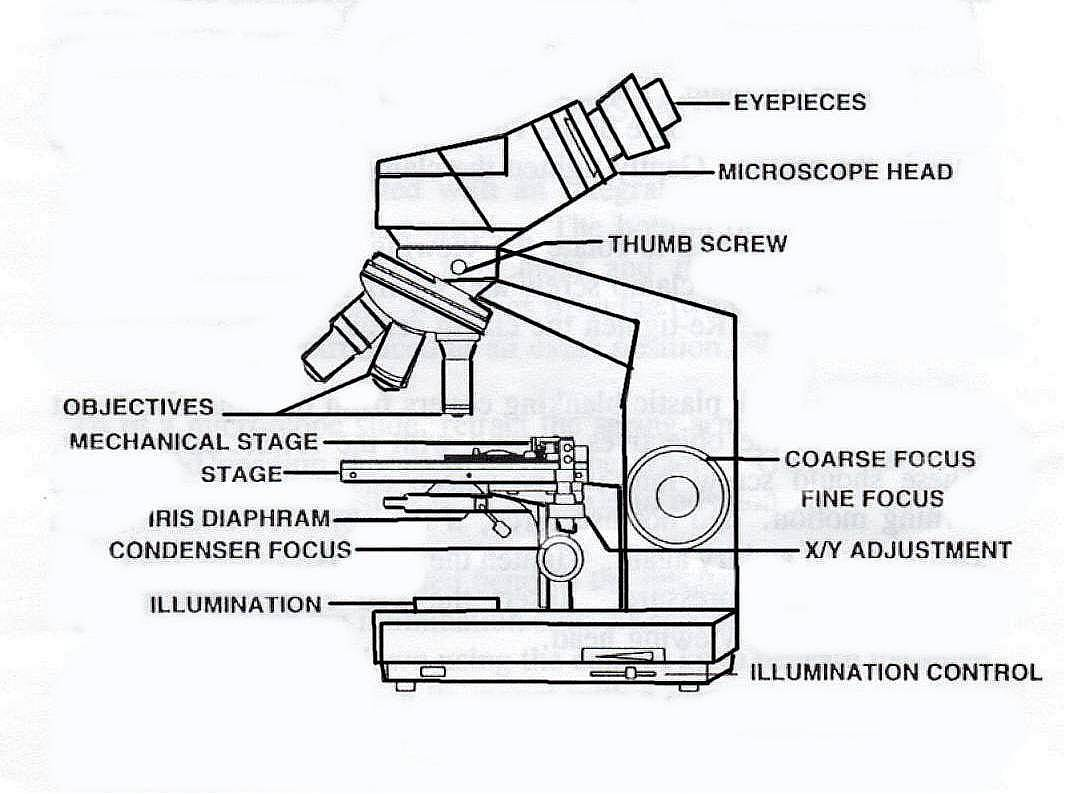 UD Virtual Compound Microscope - Welcome to the University of Delaware